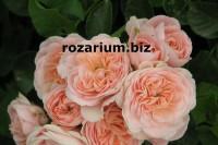 Интернет магазин цветов симферополь